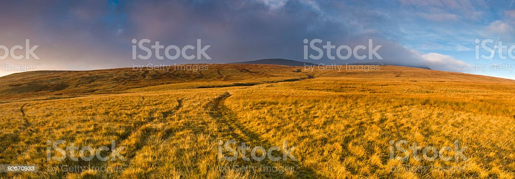 Golden grassland trail royalty-free stock photo