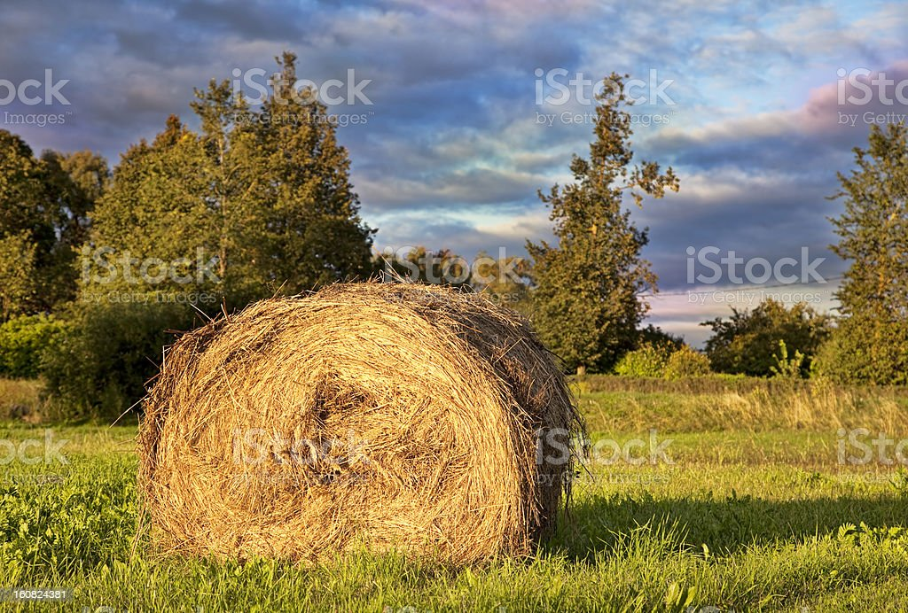 Golden Hay Bale  in the countryside royalty-free stock photo