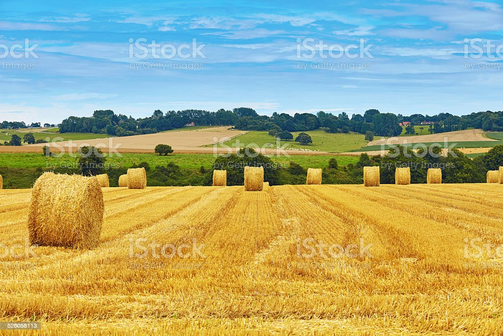 Golden hay bales in countryside stock photo