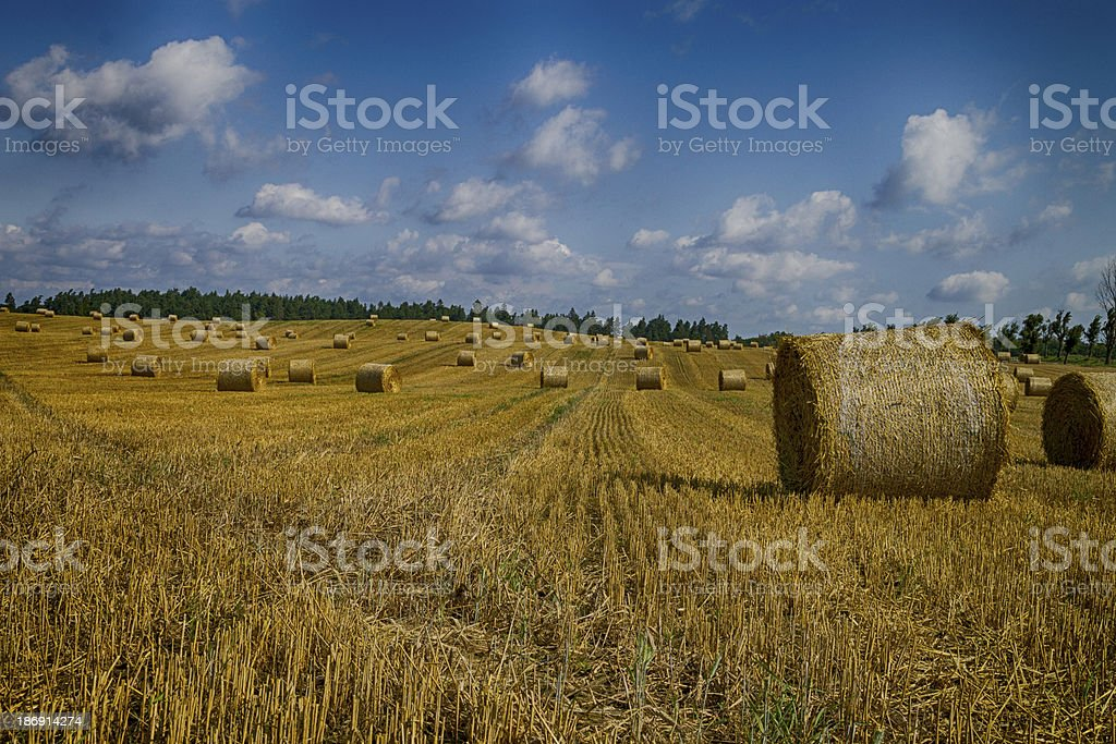 Golden hay bales in Polish countryside royalty-free stock photo