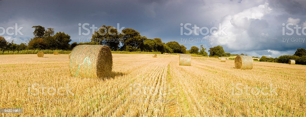Golden hay bales, stormy skies royalty-free stock photo