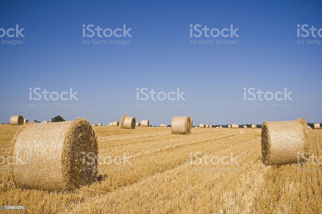Golden hay royalty-free stock photo
