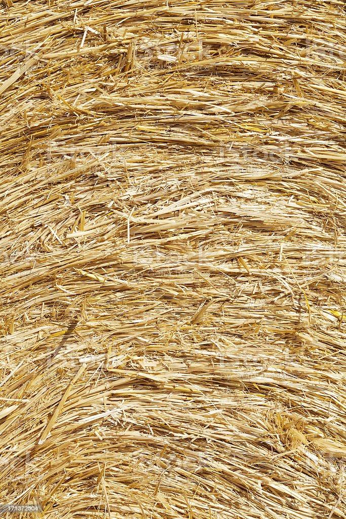 Golden hay texture background stock photo