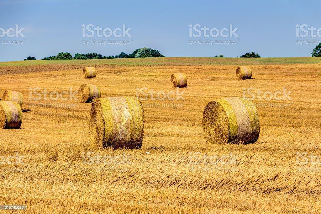 Golden haye bales stock photo