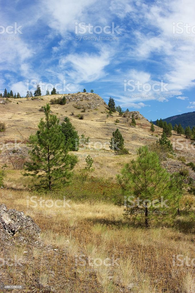 Golden hillside and trees, Kalamalka Lake Provincial Park, Vernon, Canada stock photo