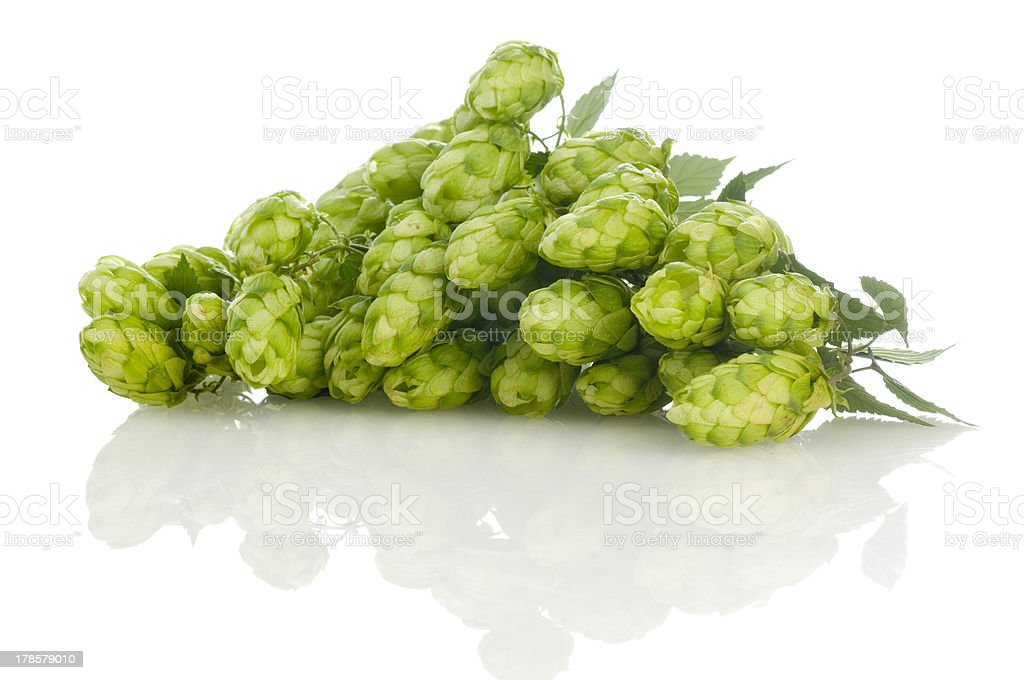 golden hops royalty-free stock photo