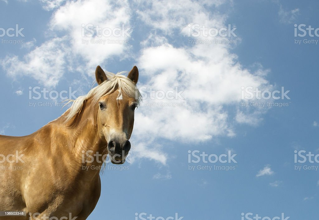 golden horse and blue sky - copy space stock photo