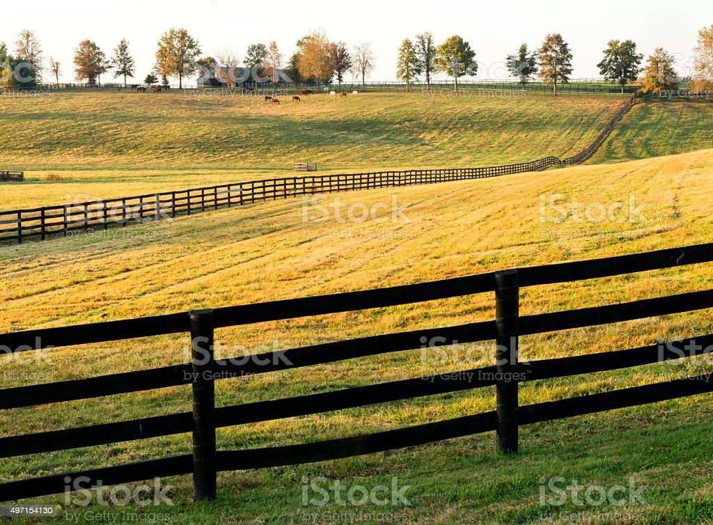 Golden horse farm near Lexington, Kentucky stock photo