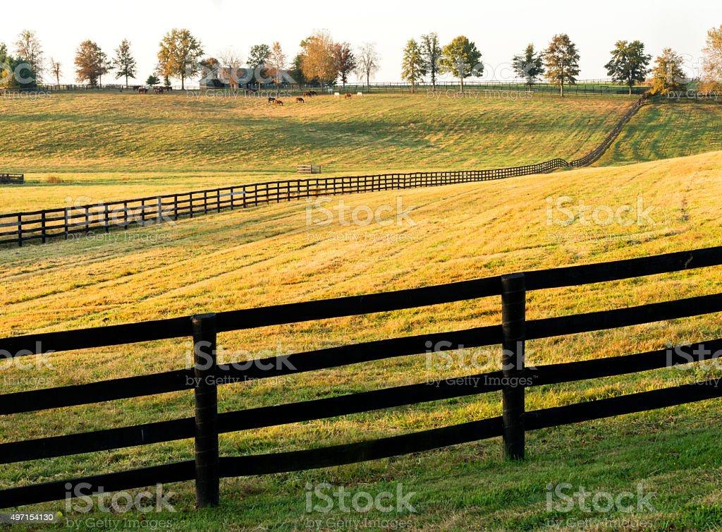 Golden horse farm near Lexington, Kentucky stock photo