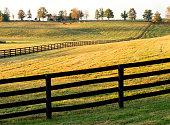 Golden horse farm near Lexington, Kentucky