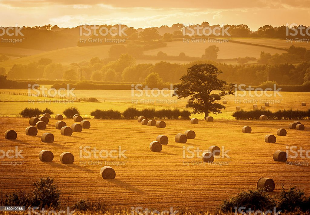 Golden hour hay bales stock photo