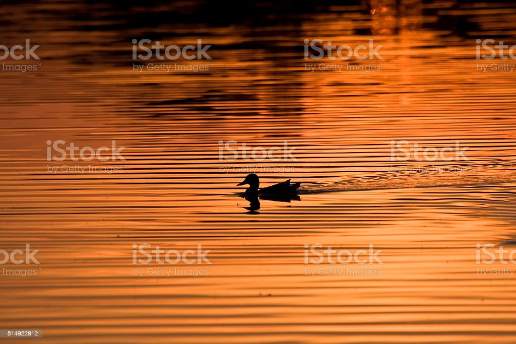Golden lake stock photo