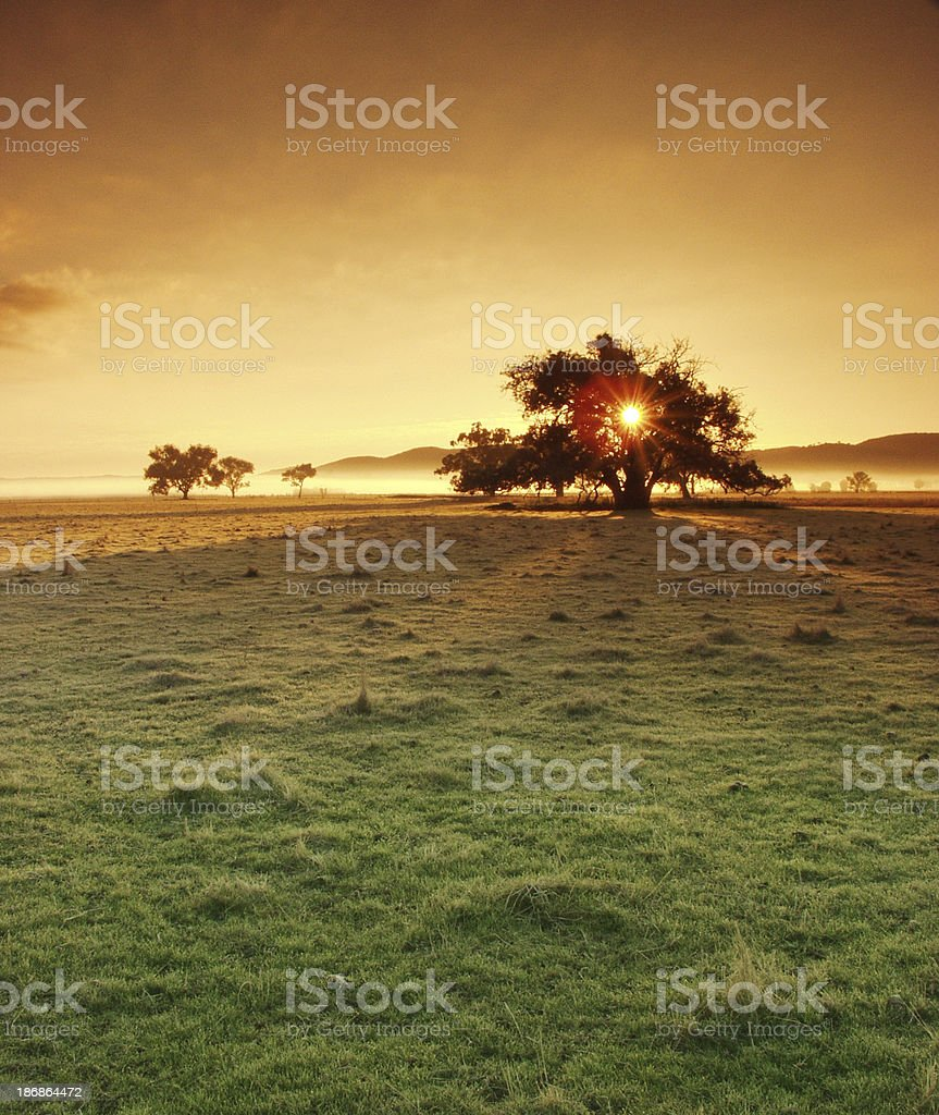 Golden Land royalty-free stock photo