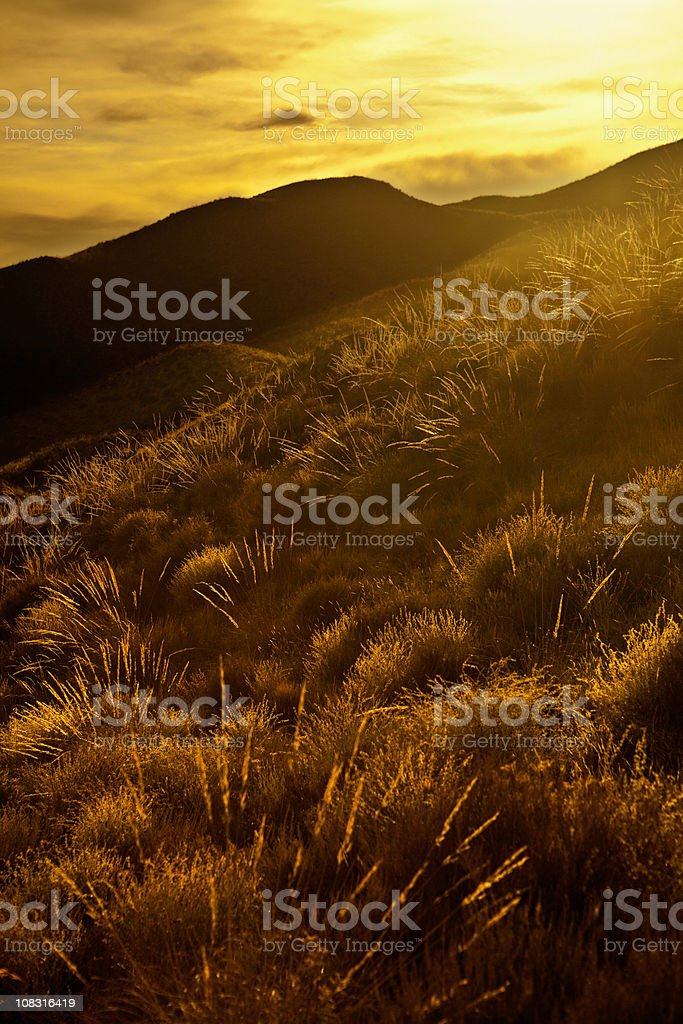 Golden landscape in Spain royalty-free stock photo
