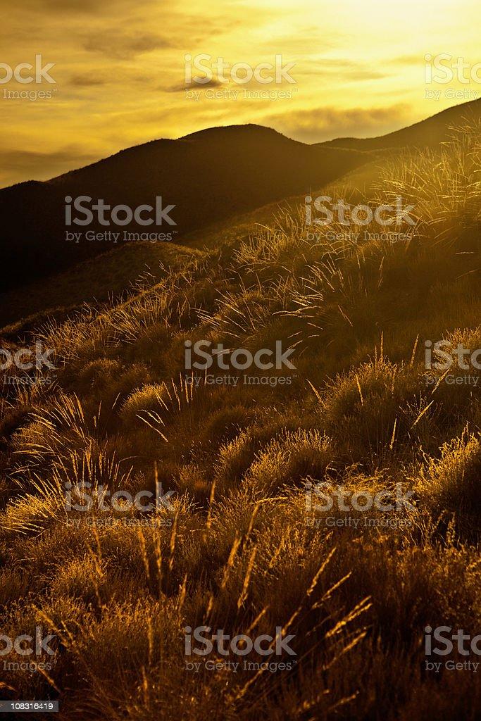Golden landscape in Spain stock photo