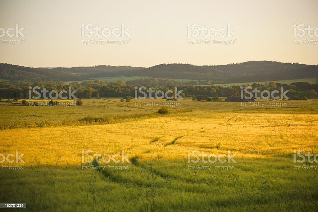 Golden landscape royalty-free stock photo