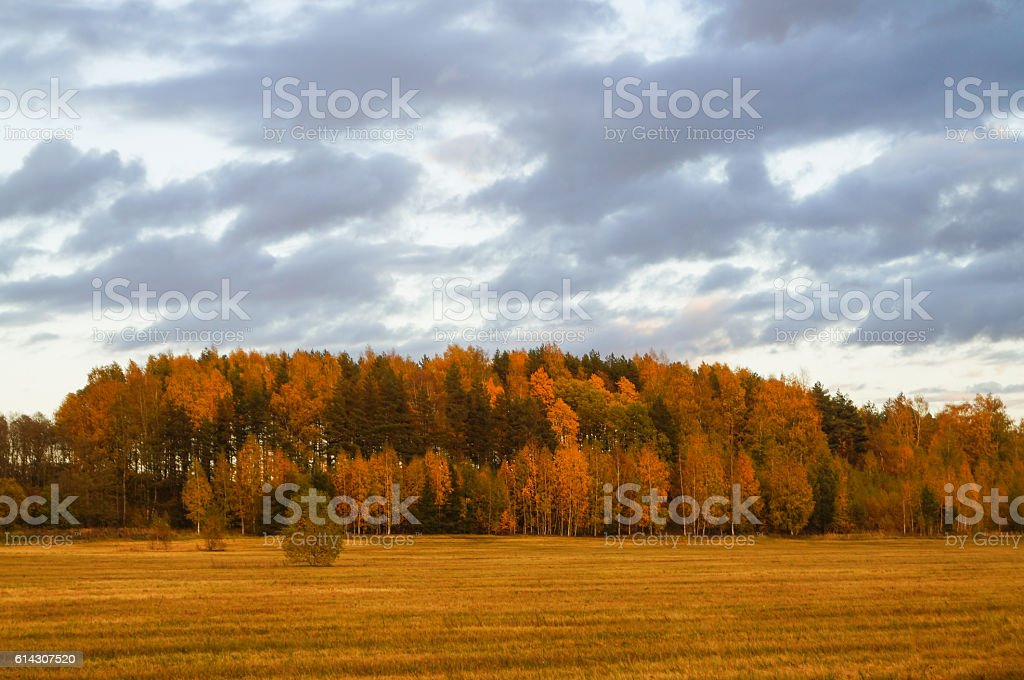 golden leaf at autumn stock photo