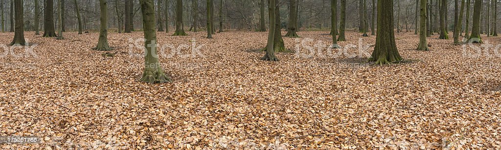 Golden leaf forest floor background panorama royalty-free stock photo
