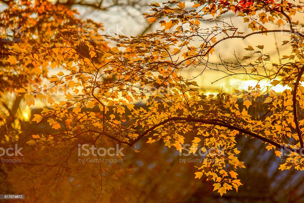 Golden leafs with roof background stock photo