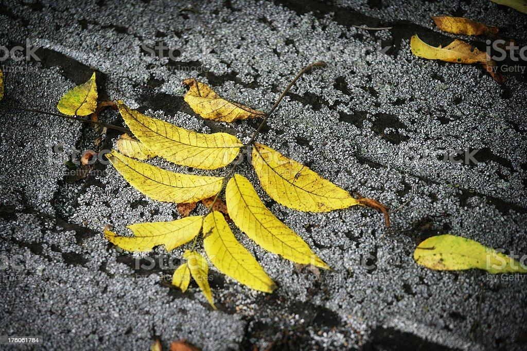Golden Leaves on Dark Roof stock photo