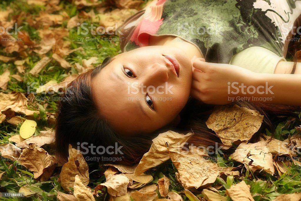 Golden Leaves stock photo