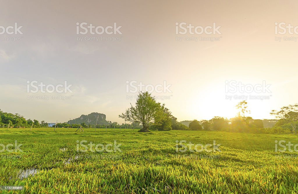 Golden meadow in summer stock photo
