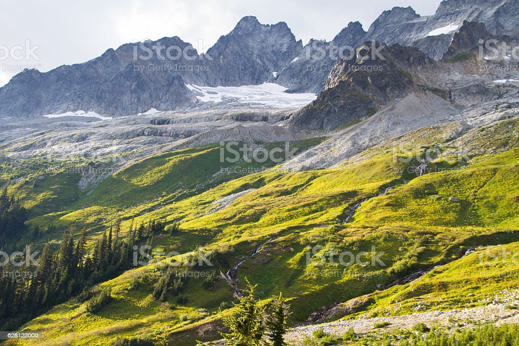 Golden Meadow stock photo