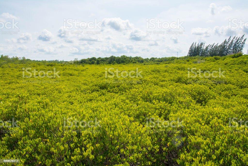 Golden Meadow Prong or Thung Prong Thong (Thai language) at Rayong, Thailand (soft focus) stock photo