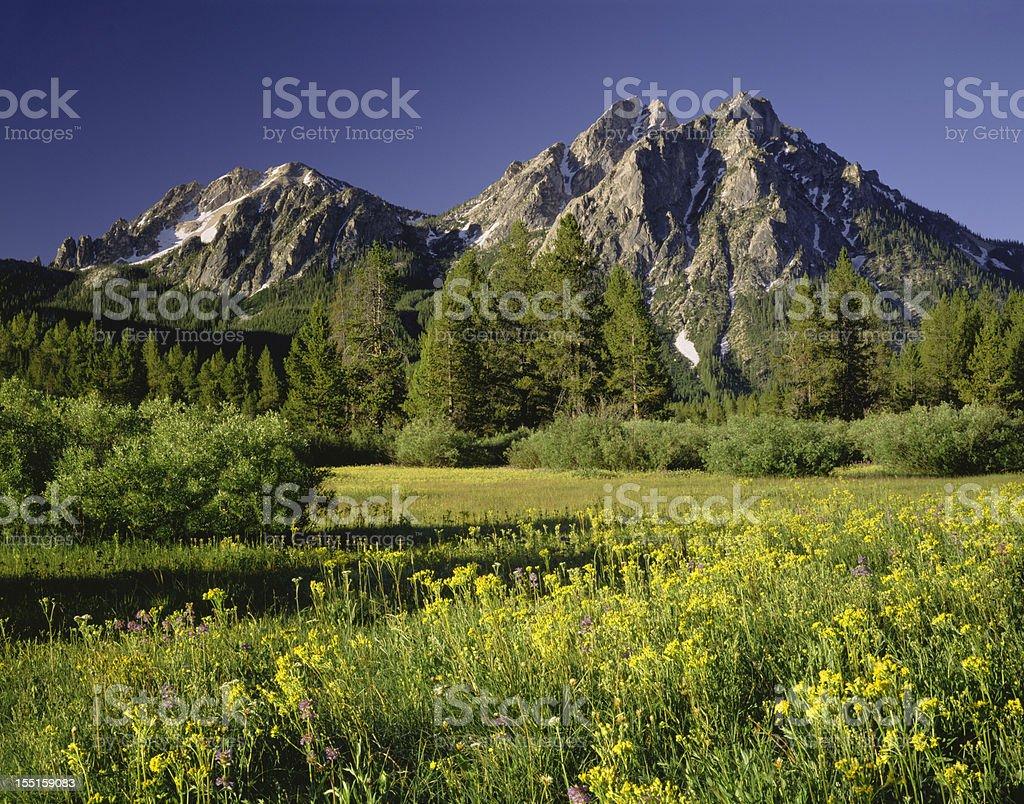 Golden Morning in Idaho (P) stock photo