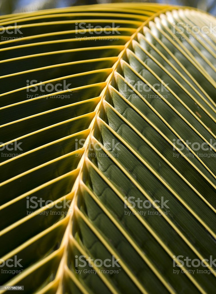 Golden palm royalty-free stock photo