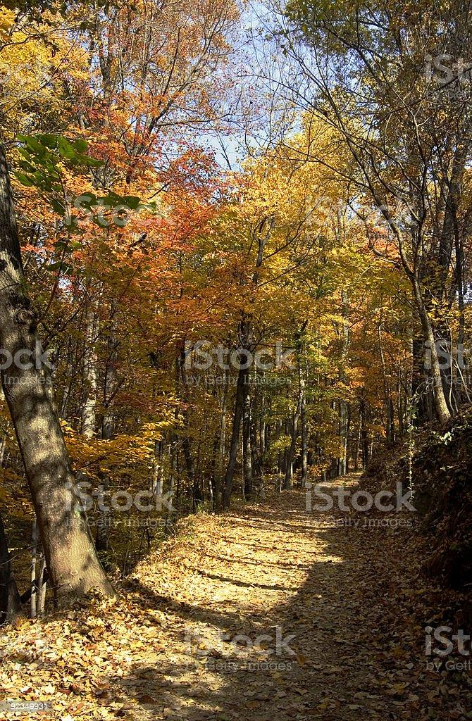 golden path stock photo