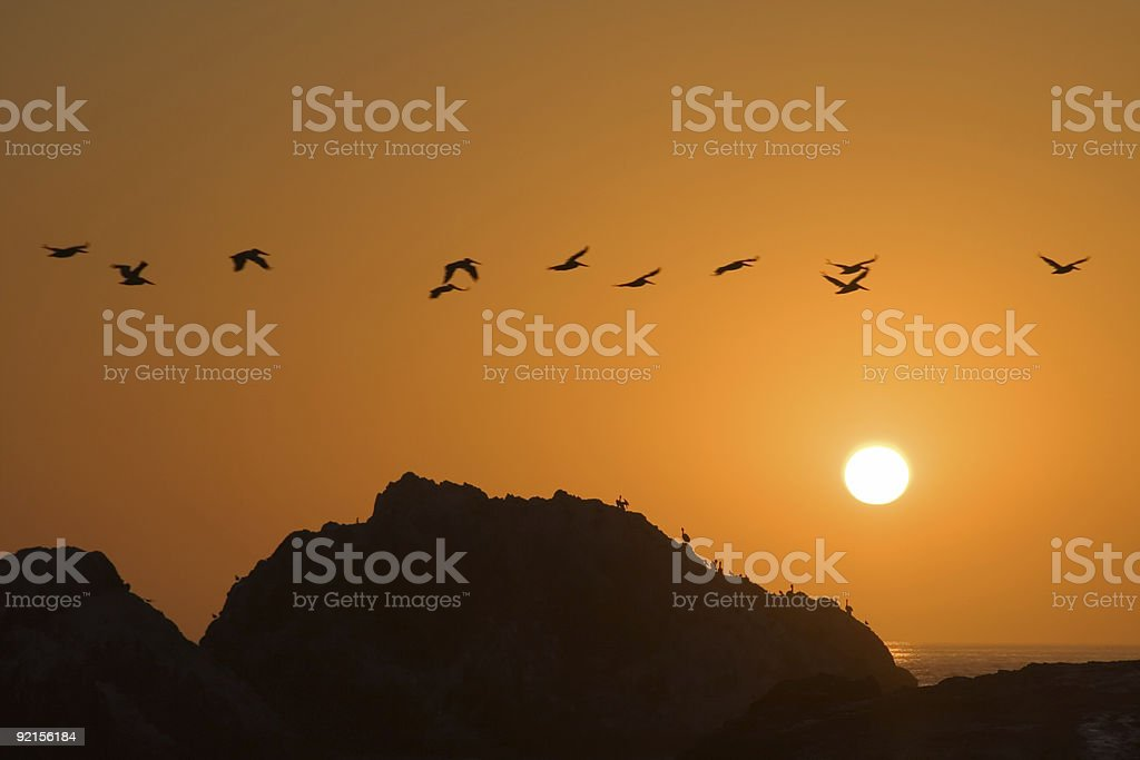 Golden Pelican Sunset-Horizontal royalty-free stock photo