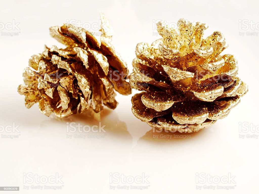 Golden Pine Cones stock photo
