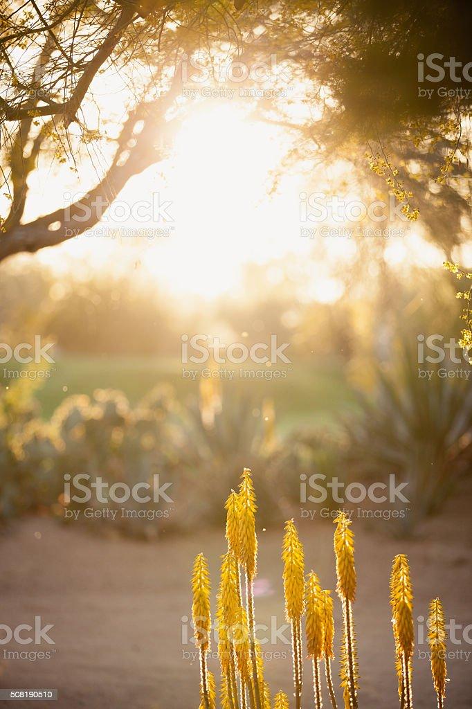 Golden Plants Desert Sun stock photo