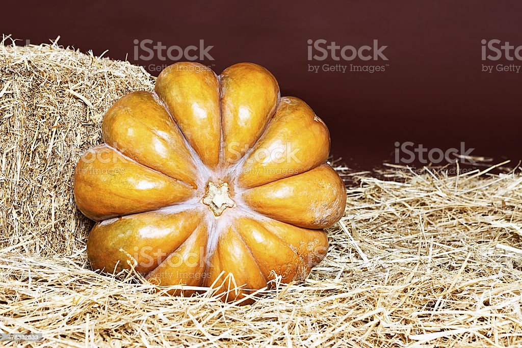 Golden pumpkin, ripe and ready for pie making or Halloween royalty-free stock photo
