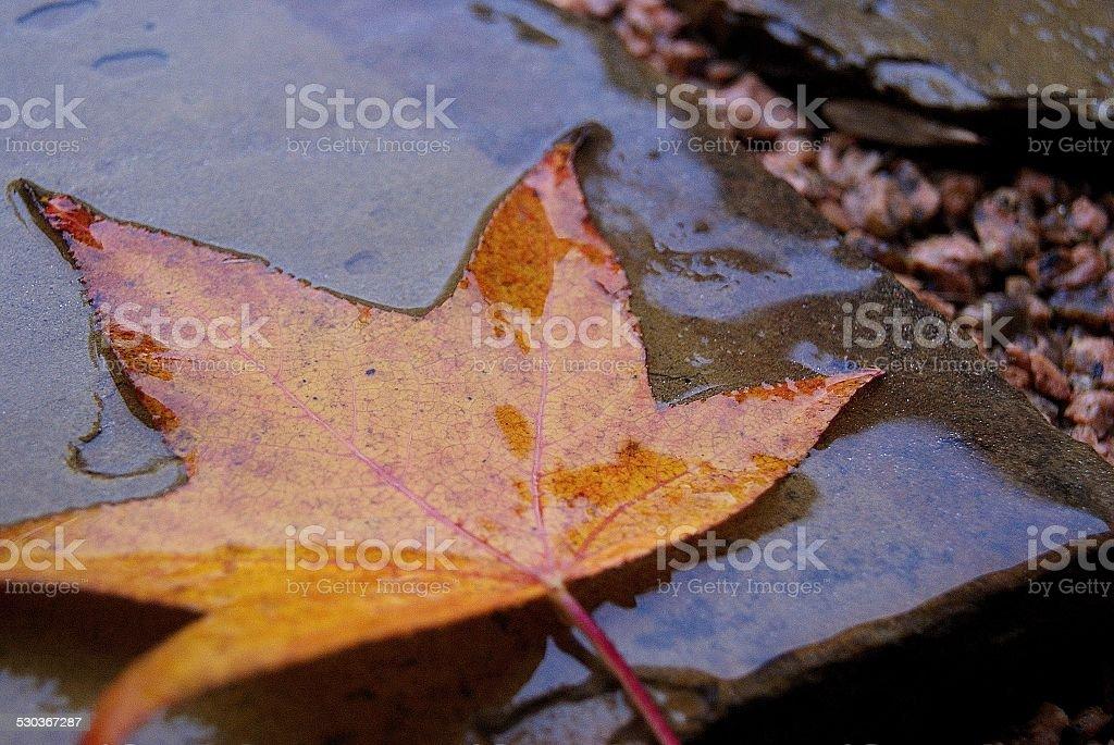 Golden Rain royalty-free stock photo