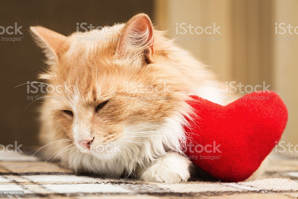 Golden red cat turned away stock photo