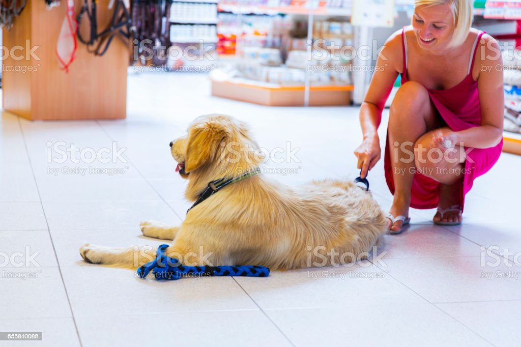 Golden retriever in pet store...woman owner is brushing him stock photo