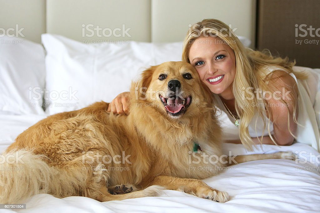 Golden Retriever Portraits stock photo