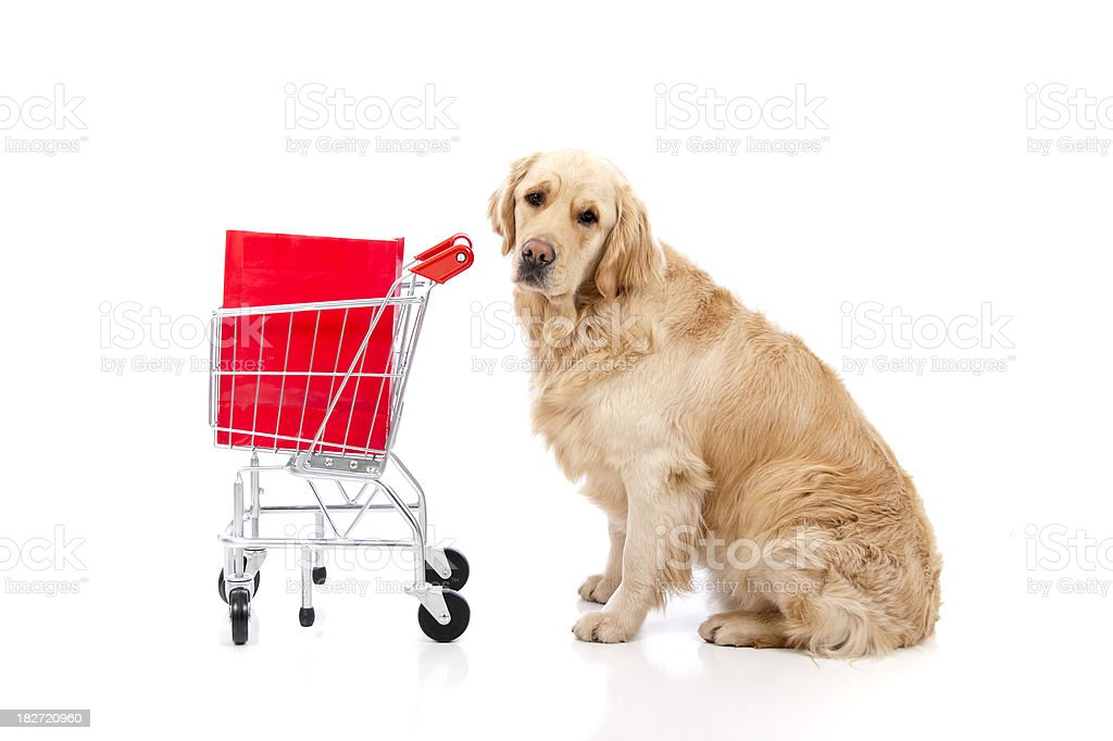 Golden Retriever Shopping royalty-free stock photo