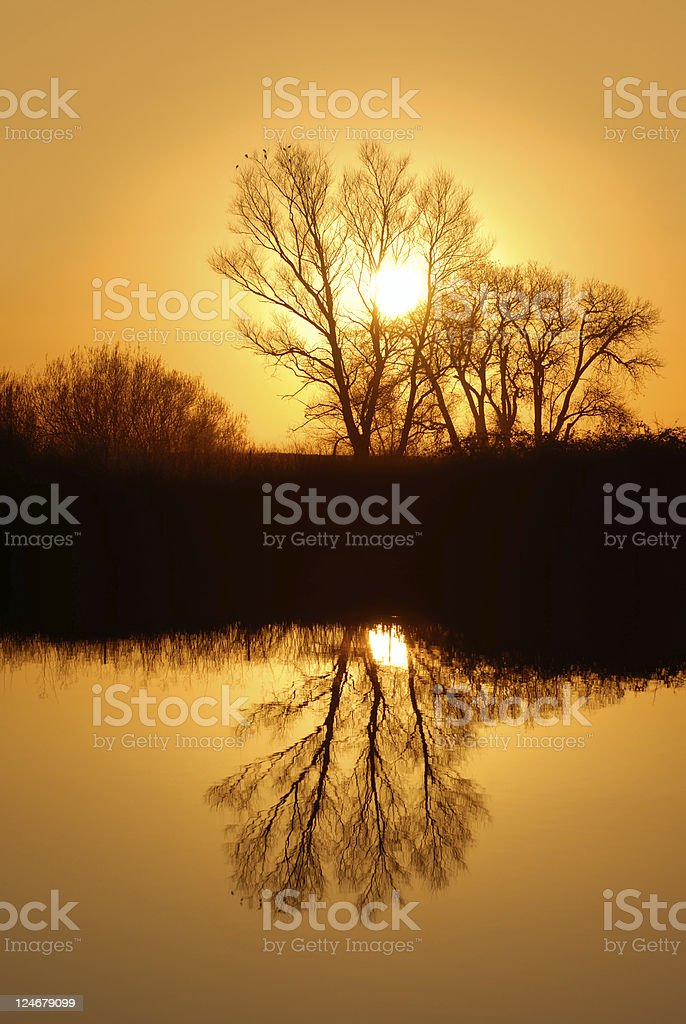 Golden Riparian Reflection royalty-free stock photo