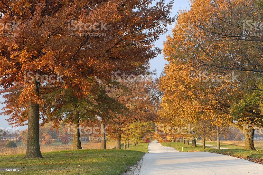 Golden Road royalty-free stock photo