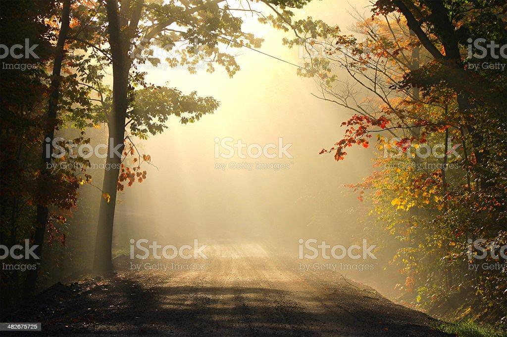 golden road stock photo