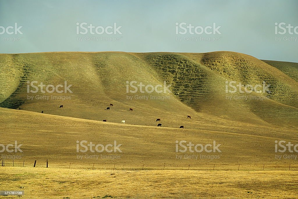 Golden Rolling Hills of California royalty-free stock photo