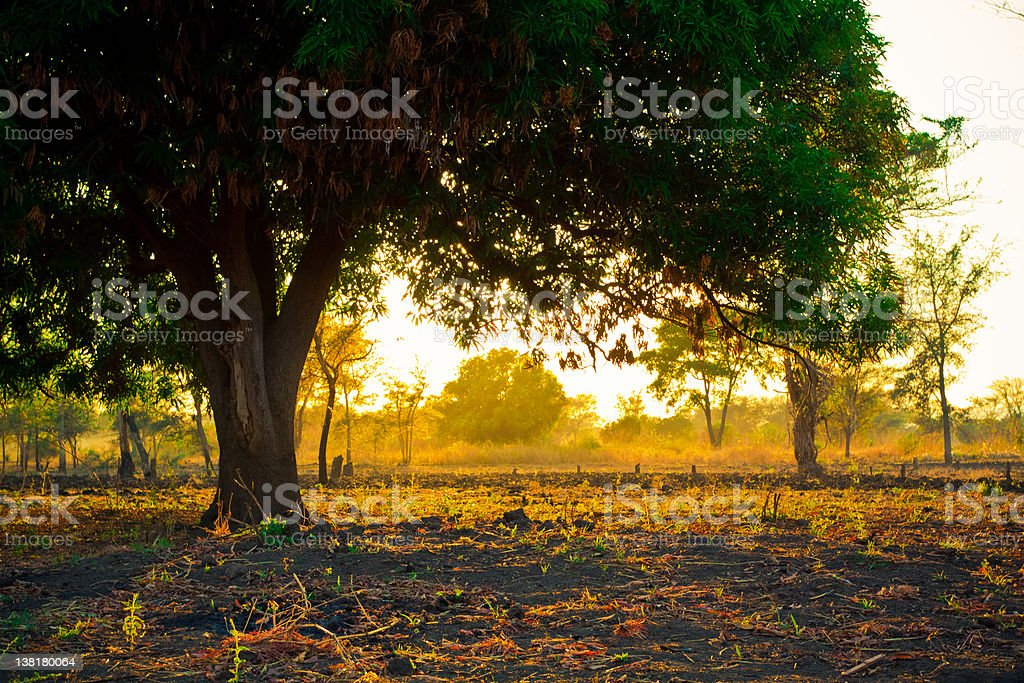 Golden Scenic Panorama stock photo