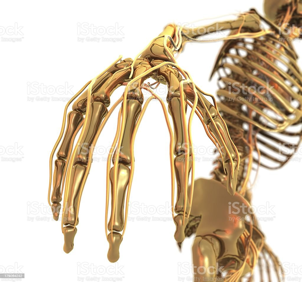 Golden Skeleton Hand royalty-free stock photo