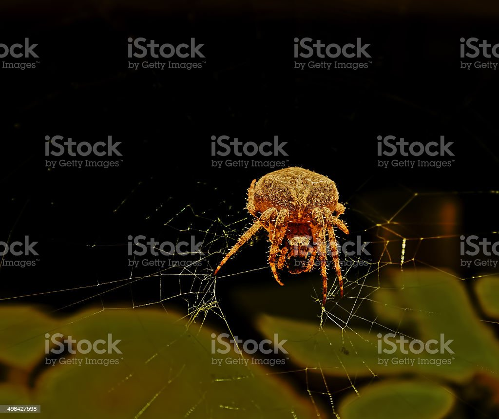 golden spider royalty-free stock photo