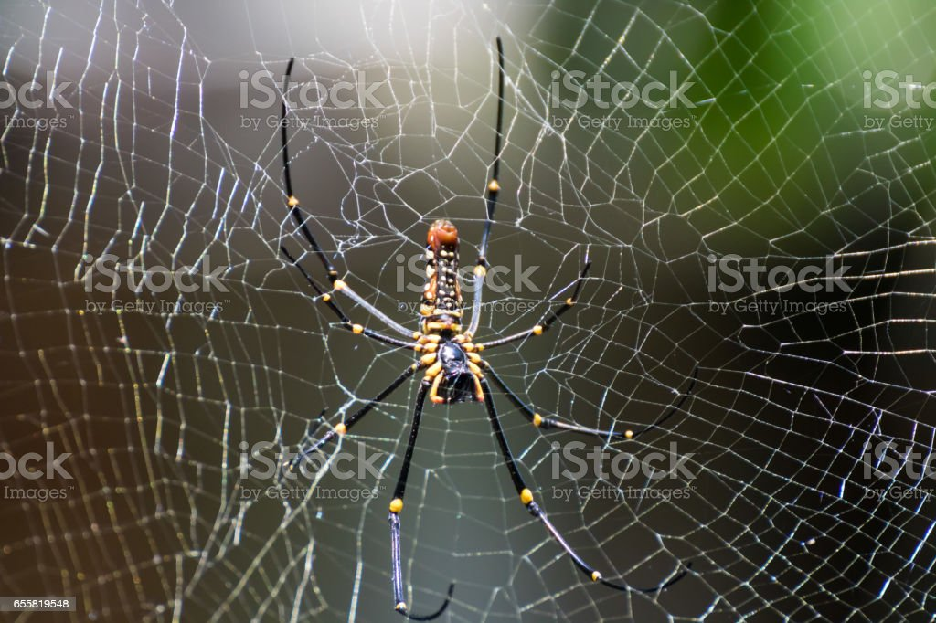 Golden Spider stock photo
