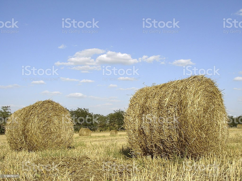 golden straw bales royalty-free stock photo