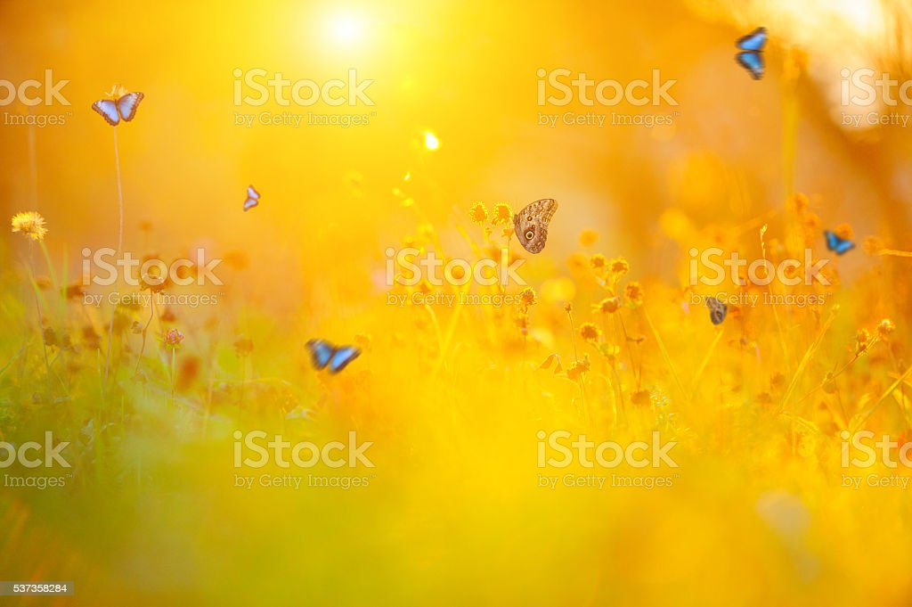 Golden summer meadow stock photo